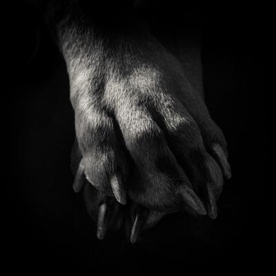 Dobermann paws. 2014