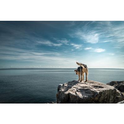 Barney: Babbacombe Bay